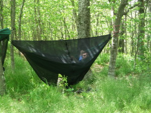 black bear hammock